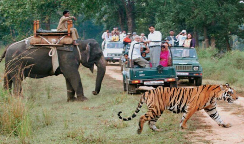 Wildlife & Adventure