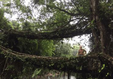 Nature Trail & Wildlife of Meghalaya