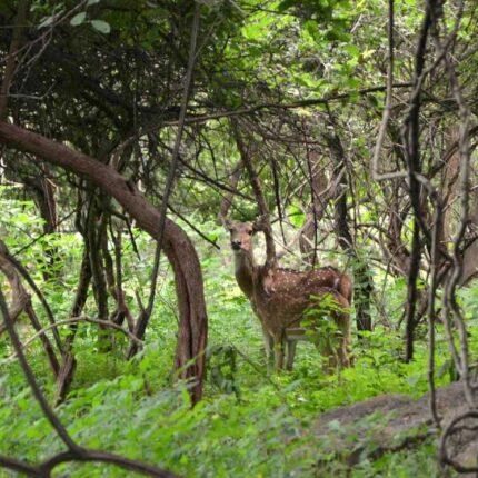 balpakram-forest