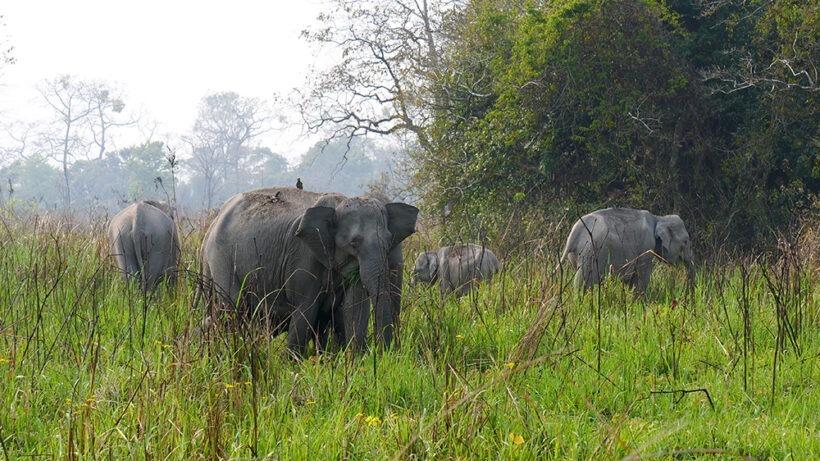 manas-national-park 01