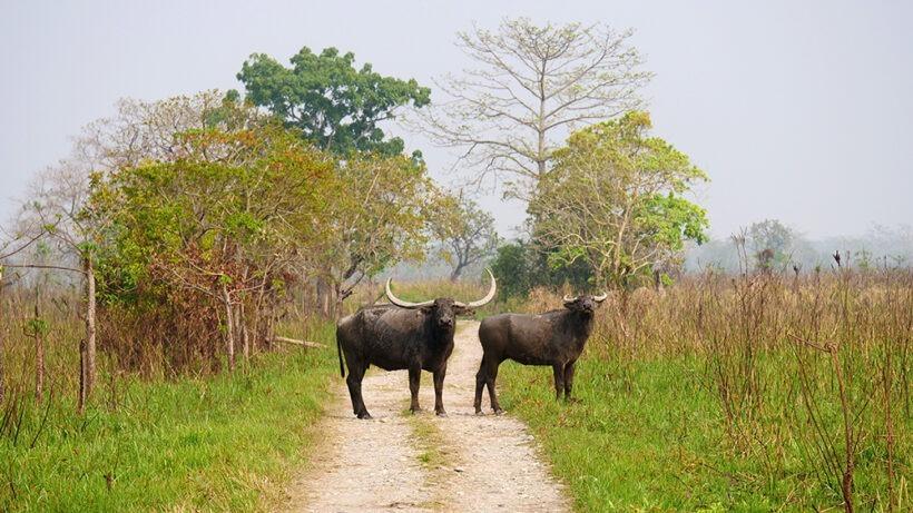 manas-national-park 02