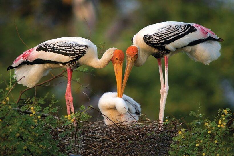 Bharatpur cranes