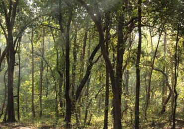 Trek Forest, Satpura