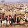 Cattle Fair, Nagaur