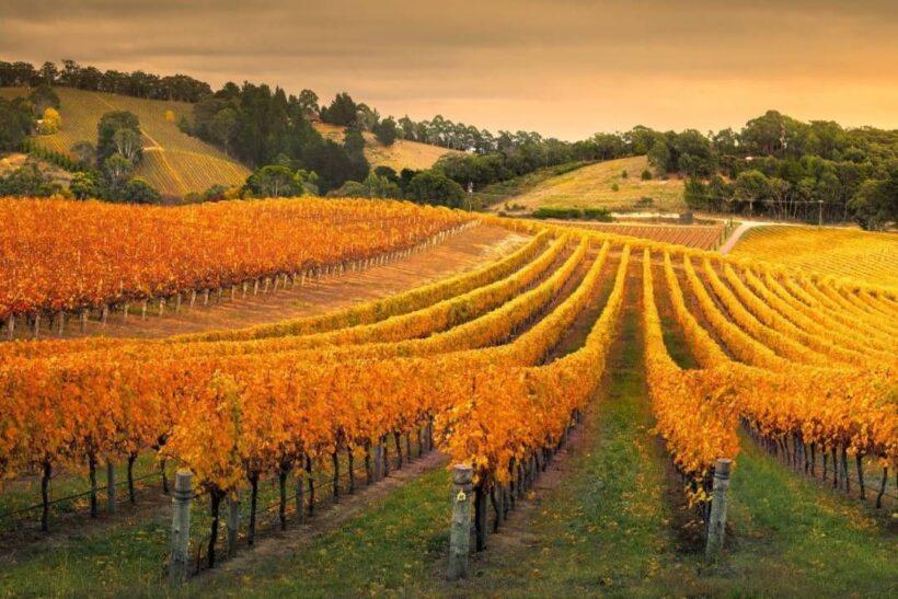 Wineries region, Adelaide